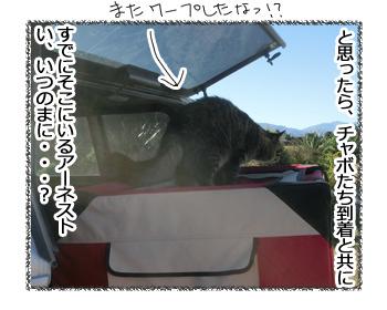 10032017_cat2.jpg