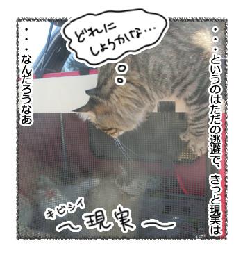 10032017_cat4.jpg