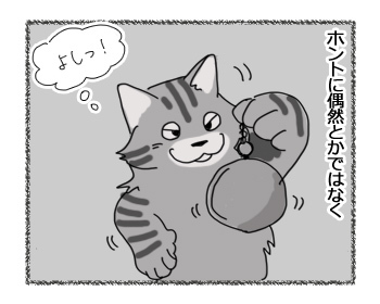 11022017_cat2.jpg