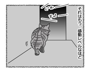11022017_cat3.jpg