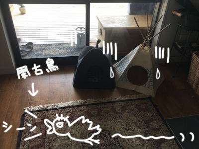 11032017_cat7.jpg