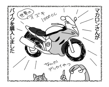 11042017_cat1.jpg