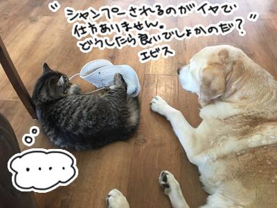 12022017_cat2.jpg