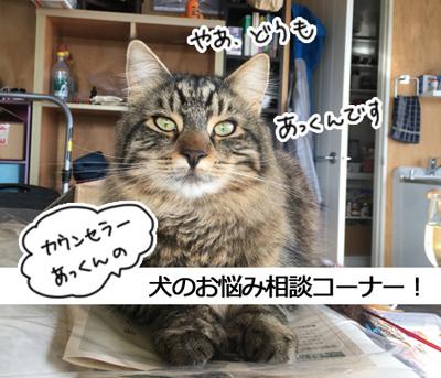 12022017_cat3.jpg