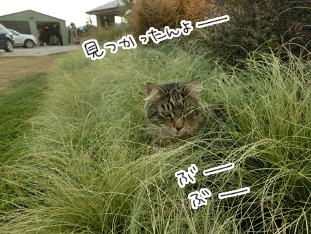 12032017_cat2.jpg