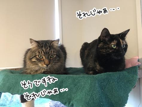 12042017_cat3.jpg