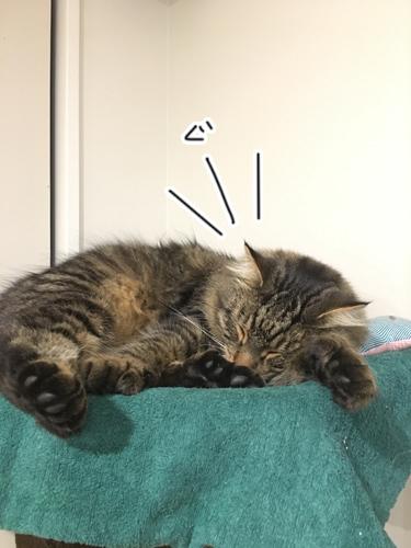 12042017_cat4.jpg