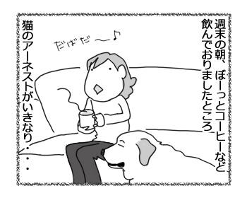13032017_cat1.jpg