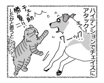 13032017_cat2.jpg