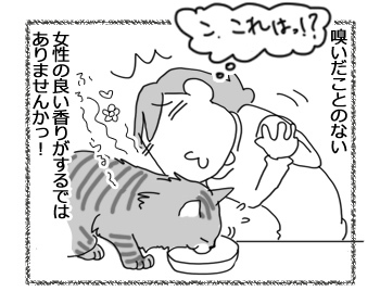 13042017_cat2.jpg