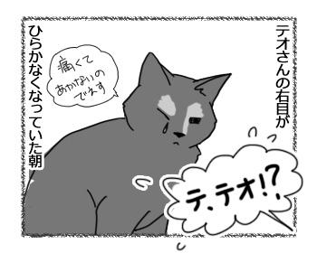 14022017_cat1.jpg