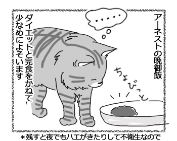 14032017_cat1.jpg