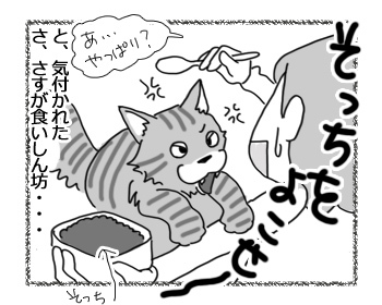14032017_cat4.jpg