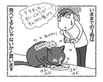 14042017_cat2.jpg
