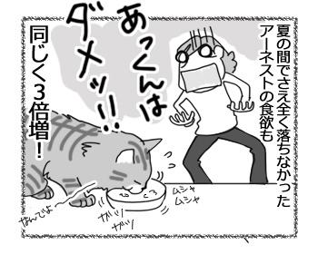 14042017_cat4.jpg