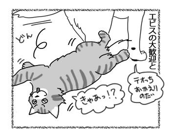 15022017_cat2.jpg