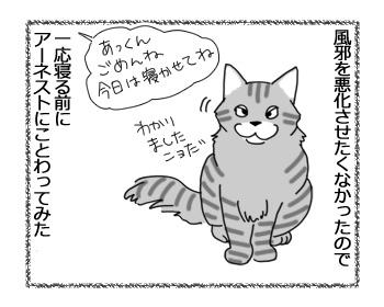 15032017_cat1.jpg