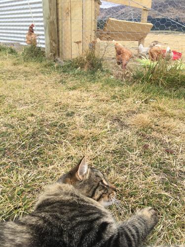 15042017_cat2.jpg