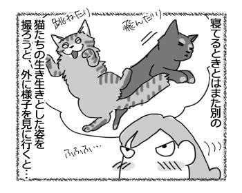 16022017_cat3.jpg