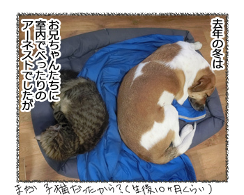17032017_cat1.jpg