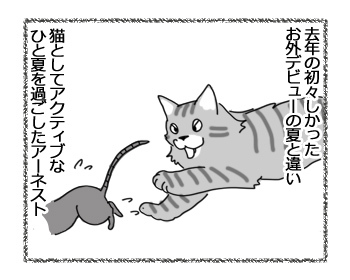 17032017_cat2.jpg
