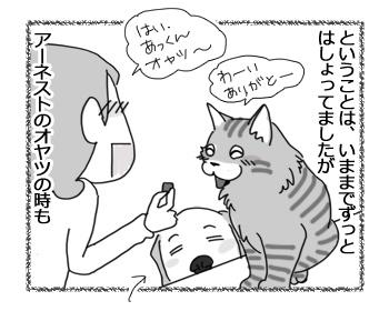17042017_cat2.jpg