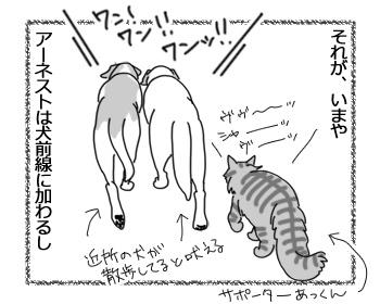18042017_cat2.jpg