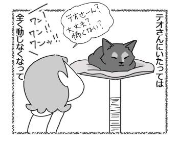 18042017_cat3.jpg