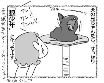 18042017_cat4.jpg