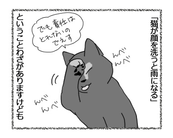 19032017_cat1.jpg