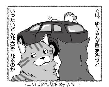 19032017_cat2.jpg