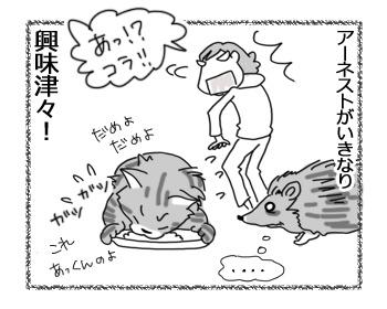 19042017_cat4.jpg