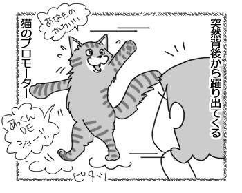 20022017_cat3.jpg