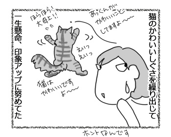 20022017_cat4.jpg