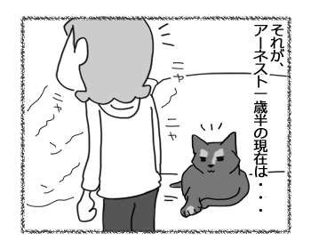 20032017_cat2.jpg