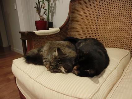20032017_cat6.jpg