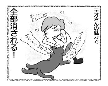 22022017_cat4.jpg
