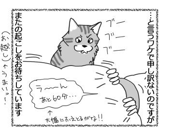 22032017_cat2.jpg