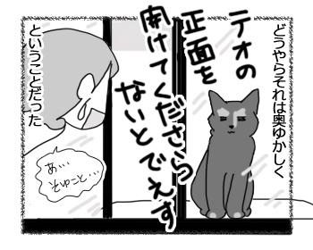 23022017_cat4mini.jpg
