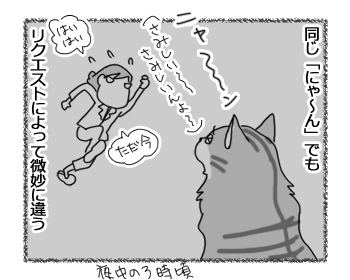 24022017_cat2.jpg