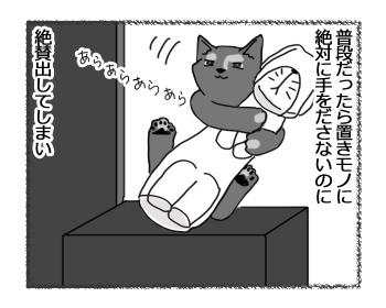 24032017_cat2.jpg