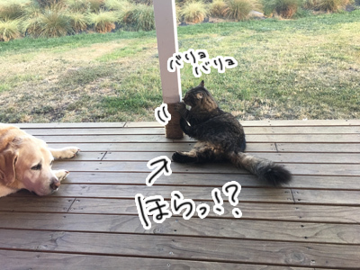 25022017_cat2.jpg