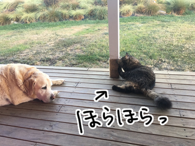 25022017_cat3.jpg
