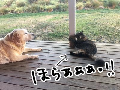 25022017_cat4.jpg