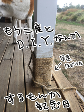 25022017_cat5.jpg