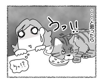 27022017_cat3.jpg