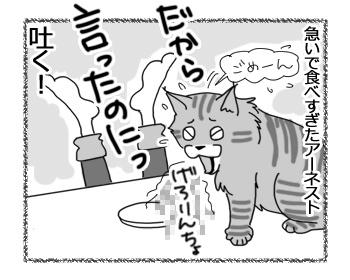 27022017_cat4.jpg