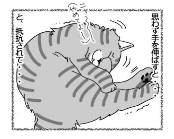 27032017_cat2.jpg