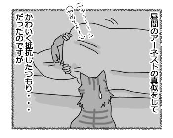 27032017_cat5.jpg
