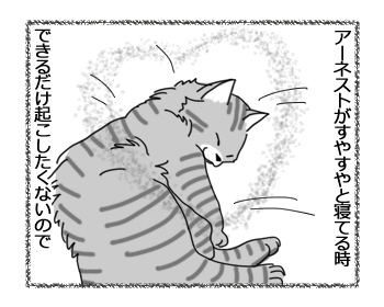 29032017_cat1.jpg